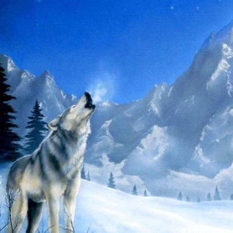 Wolf Ringst