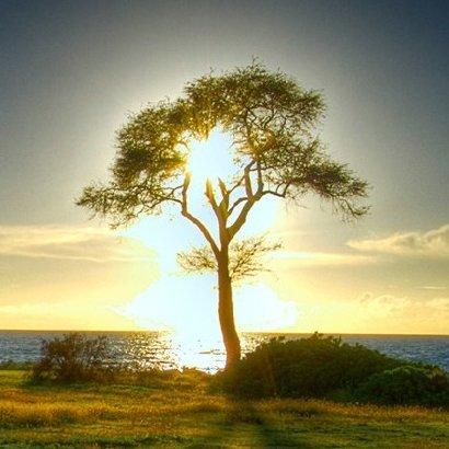 Tree Kadayso
